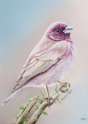 Site-bird
